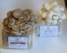 Load image into Gallery viewer, BROWN AND WHITE MUSHROOM GROW KIT