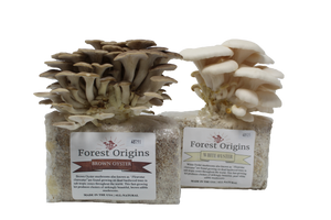 BROWN AND WHITE MUSHROOM GROW KIT