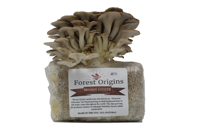 BROWN OYSTER MUSHROOM GROW KIT