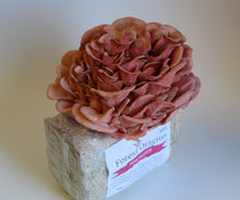 Load image into Gallery viewer, PINK OYSTER MUSHROOM GROW KIT
