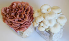 Load image into Gallery viewer, PINK AND WHITE MUSHROOM GROW KIT