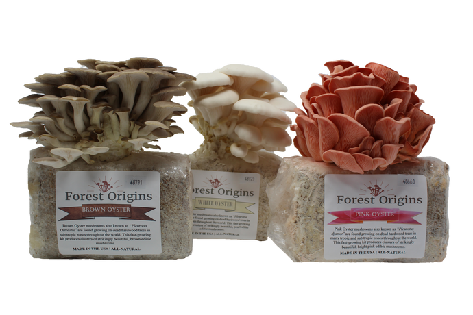 SPECIALTY TRIO MUSHROOM GROW KIT