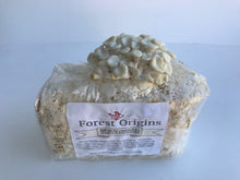 Load image into Gallery viewer, WHITE OYSTER MUSHROOM GROW KIT