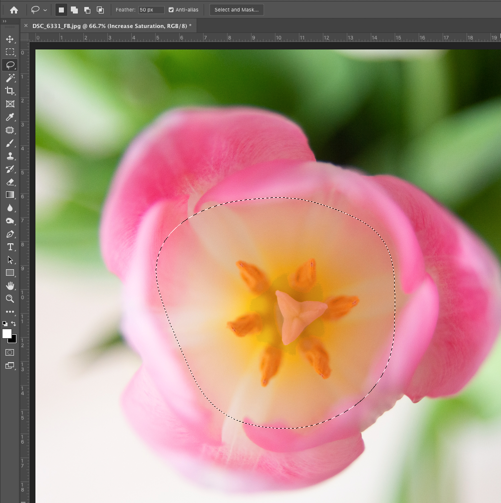 How to Use Lasso in Photoshop