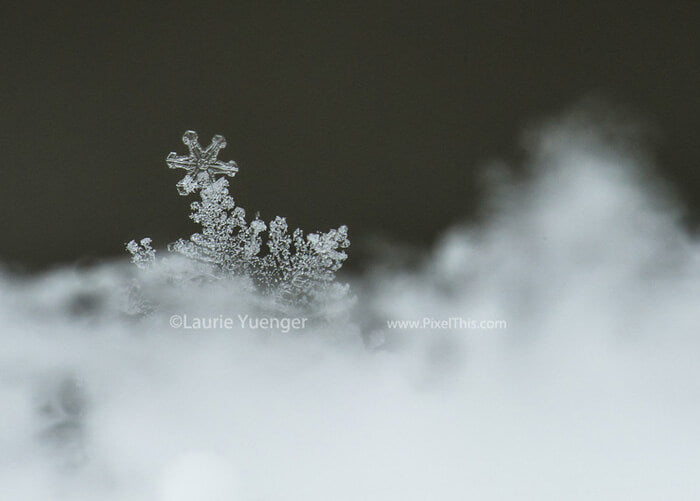 How to photograph snowflakes close up