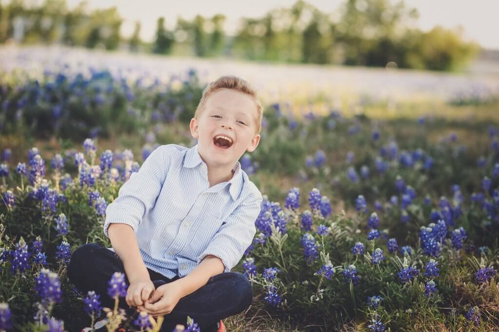 texas bluebonnet images