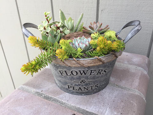 ***SOLD OUT*** Succulent Arrangement Workshop 2 at Citizen Vine, Folsom CA, March 23, 2020