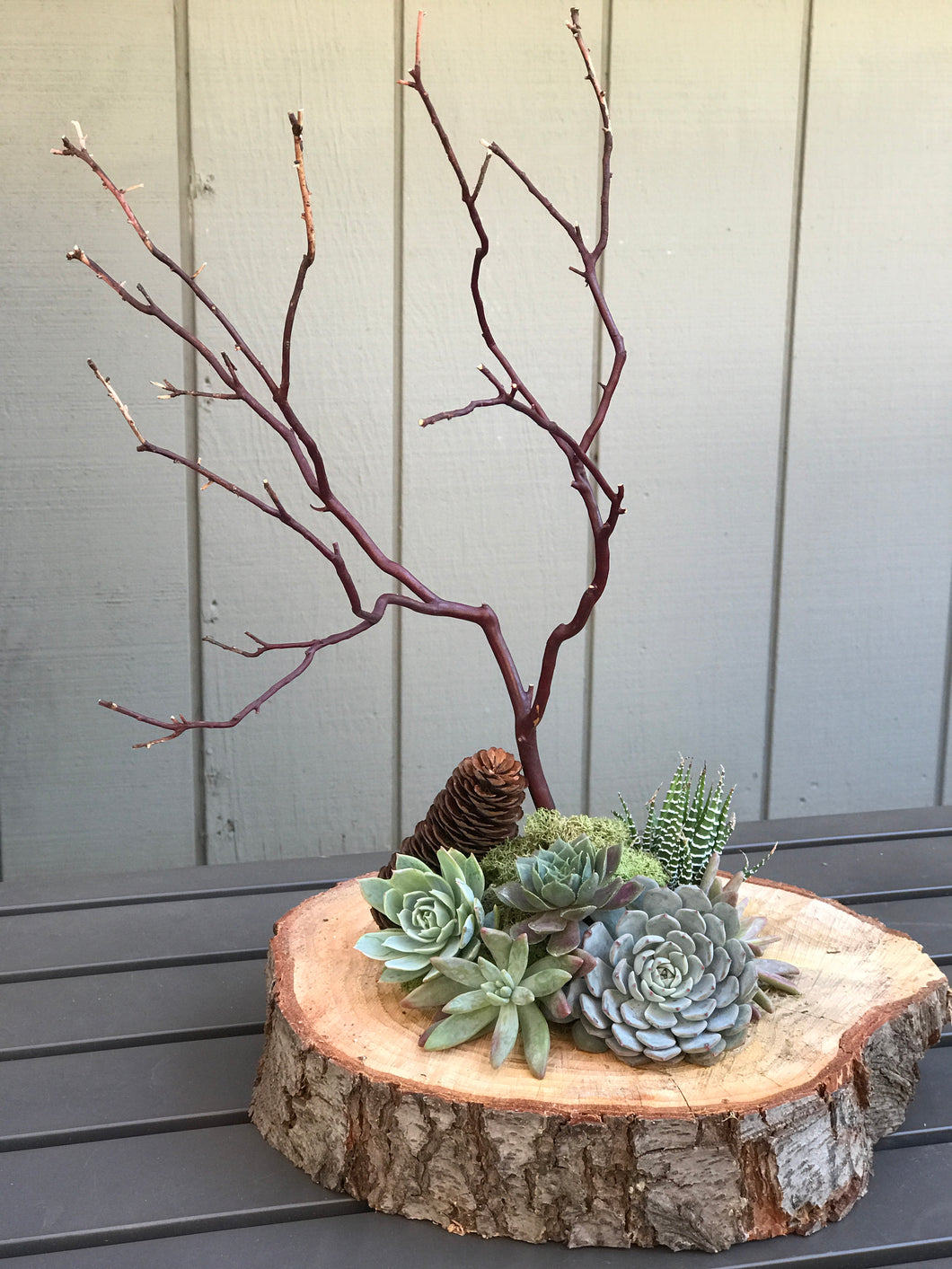 ****Ticket sales ended***Succulent Centerpiece Workshop at Folsom Holiday Shopportunity November 23