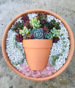 Succulent Pot In a Pot Workshop at Citizen Vine, Folsom CA May 13, 2019