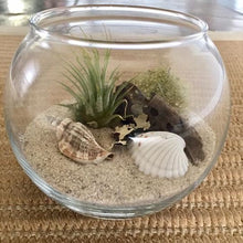 Load image into Gallery viewer, Glass Terrarium with Air Plants, DIY kit to make your own terrarium