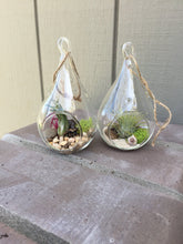 Load image into Gallery viewer, Mini Hanging Glass Terrarium with Air plant