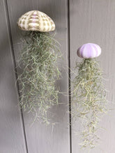 Load image into Gallery viewer, Sea urchin shell with spanish moss, hanging air plant, air plants