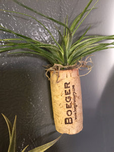 Wine cork magnet with air plant