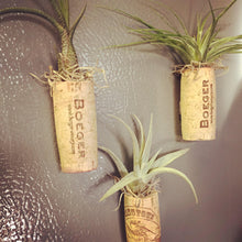 Load image into Gallery viewer, Wine cork magnet with air plant