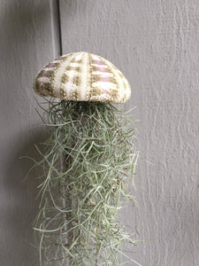 Sea urchin shell with spanish moss, hanging air plant, air plants