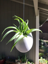 Load image into Gallery viewer, Hanging ceramic container with air plant
