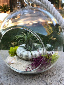 Hanging Glass Terrarium with Air Plants, DIY