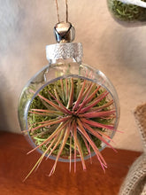Load image into Gallery viewer, LIVE air plant terrarium globe ornament