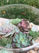 Load image into Gallery viewer, Small Glass Terrarium with succulents