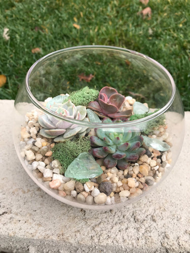 Small Glass Terrarium with succulents