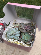 Load image into Gallery viewer, Succulent gift box with 4 LIVE succulents, living gift, Valentine's Day, Mother's Day, birthday