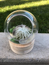 Load image into Gallery viewer, Glass and wood Terrarium with Air Plant, DIY