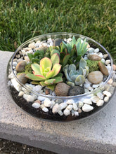 Load image into Gallery viewer, Glass Terrarium bowl with succulents, DIY