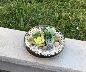 Glass Terrarium bowl with succulents, DIY