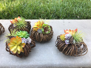 Small grapevine pumpkin with artificial succulents, fall decor, fall decoration, gift idea