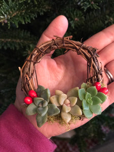 LIVE hanging succulent topped grapevine wreaths