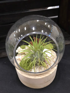 Glass and wood Terrarium with Air Plant, DIY