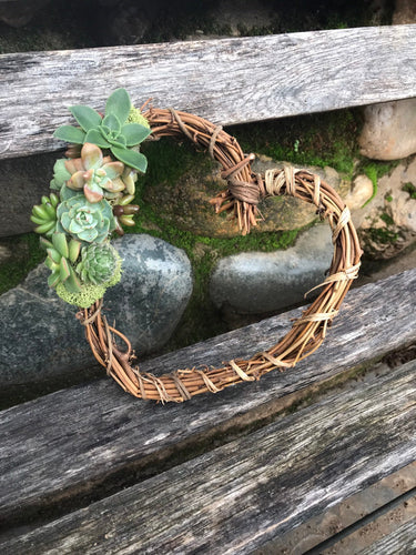 "LIVE 6"" succulent topped grapevine heart wreath"