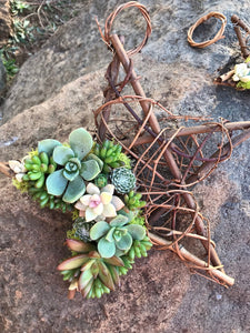 LIVE hanging succulent topped grapevine stars, hanging succulent decor, ornament, holiday gift idea