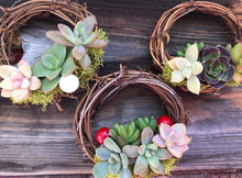 Load image into Gallery viewer, LIVE hanging succulent topped grapevine wreaths