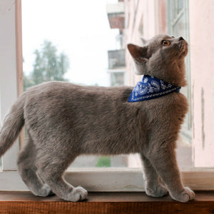 Cat Collar with Bandana/Neckerchief Scarf