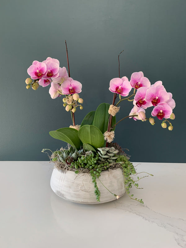 Berry Mini-Phalaenopsis Orchid & Succulent Garden