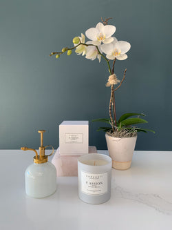 Mini White Orchid and Candle Gift Set