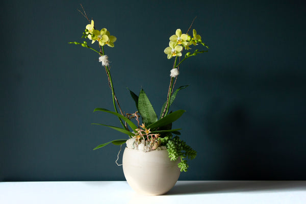 Double Yellow Phalaenopsis Planter