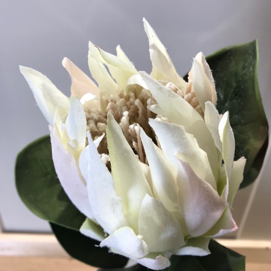 Faux White King Protea