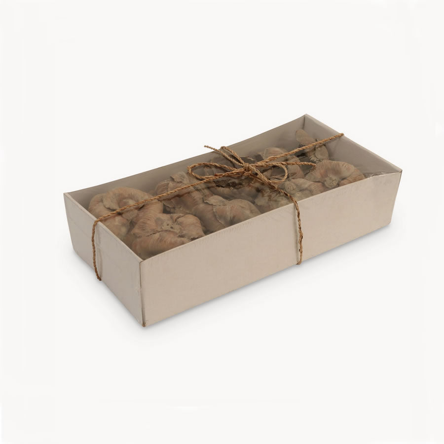 Natural Botanical Decorations in Gift Box