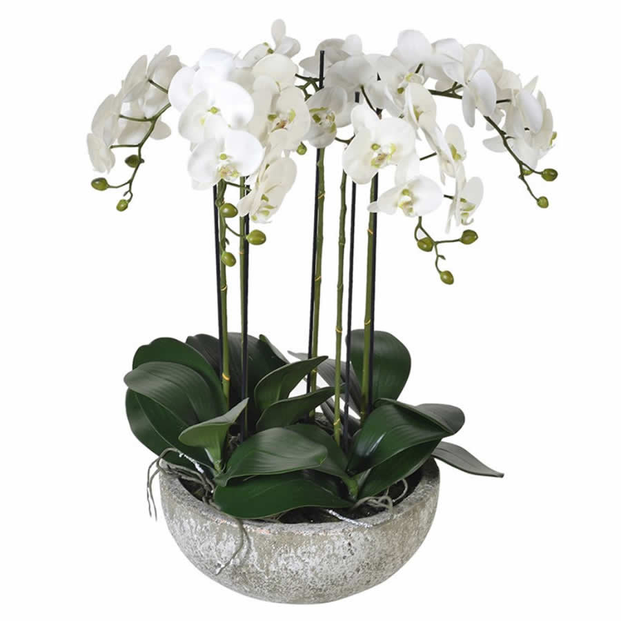 White Orchid Phalaenopsis Plants In Stone Look Bowl Small