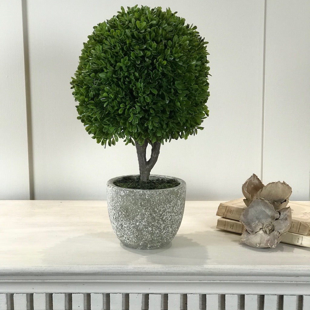 Faux Box Topiary Mini Tree In Pot Cowshed Interiors