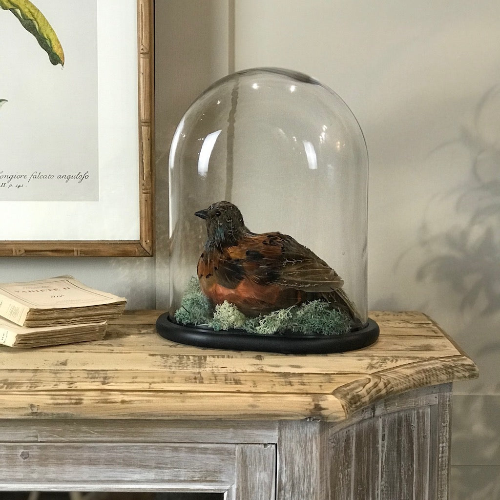 Faux Quail Taxidermy with Glass Domed Cloche
