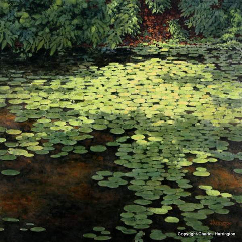 Water Lilies at Lake Weddington_24x24 acrylic by Charles Harrington
