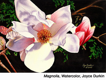 Magnolia, Watercolor by Joyce Durkin