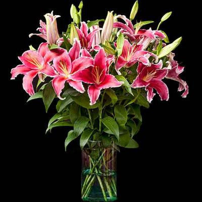 Shop online for cut flowers-Indiana liliums / lilies. Delivers in the Philippines! Buying flowers made easy!