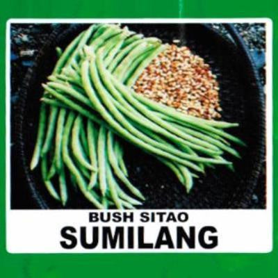 Shop online for Bush Sitao (Sumilang)  vegetable seeds. Delivers in the Philippines.  Adding greenery made easy!