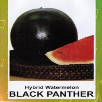 Shop online for Hybrid Watermelon (Black Panther) vegetable seeds. Delivers in the Philippines. Adding greenery made easy!
