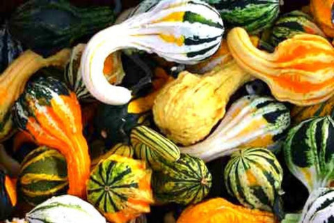 Online shopping for miniature gourds proudly grown in Davao City.  Authentic halloween decor. Delivers in the Philippines! Buying halloween decor made easy!