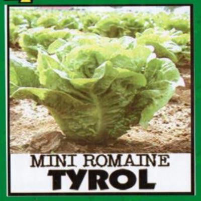Shop online Lettuce (Tyrol)  vegetable seeds. Delivers in the Philippines. Adding greenery made easy!